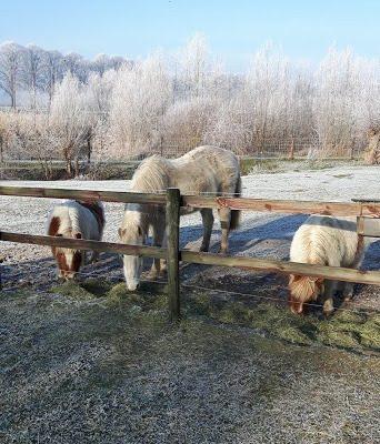 paardjes in de kou