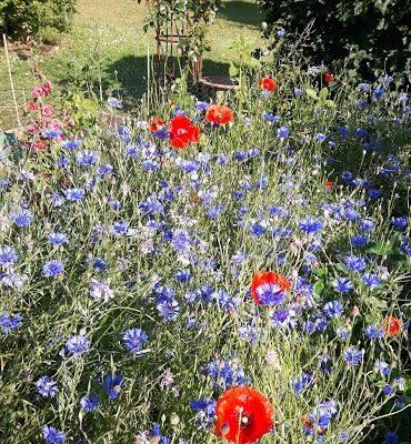 wilde plantentuin in de zomer