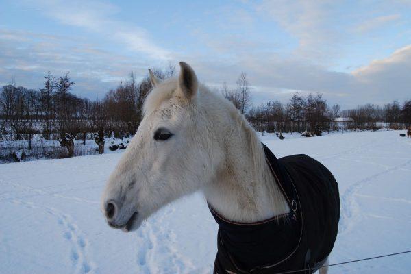 winnie in de winter