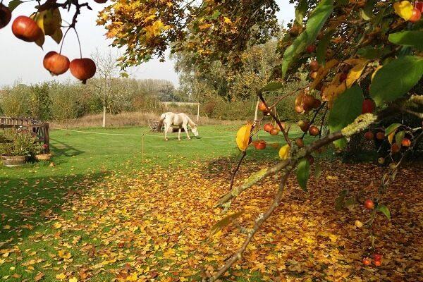 winnie in de herfst